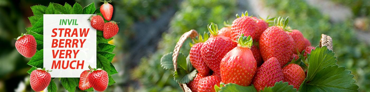 딸기체험 모음전